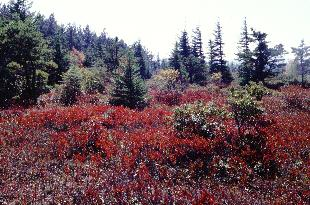 Dolly Sods Photo